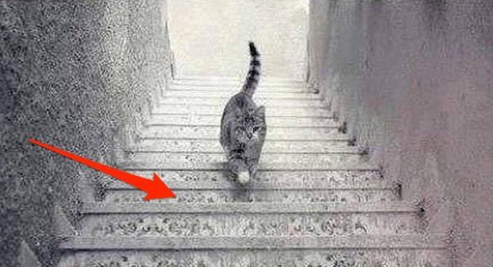 dilema-do-gato-subindo