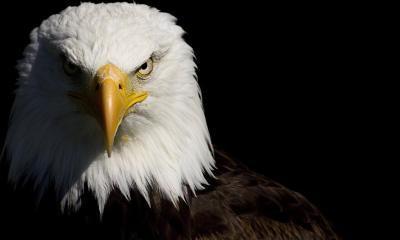 smt-Drones-Eagle