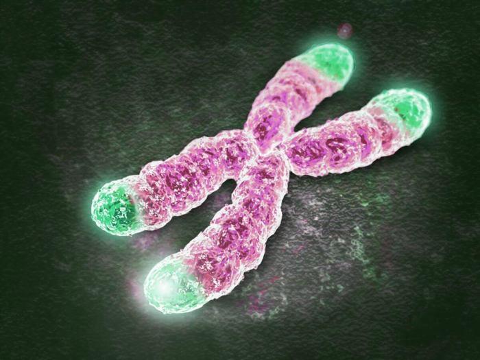 Telomeros de um Cromossomo