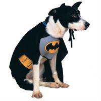 Doggy Superhero Costumes