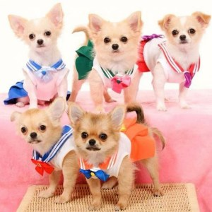 Sailor Moon Dog Costume Shut Up And Take My Yen : Anime & Gaming Merchandise