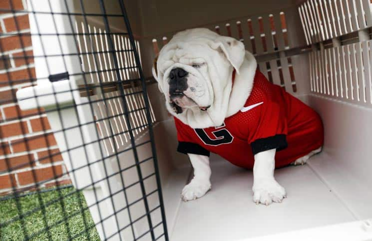 Georgia Bulldogs g Georgia Bulldogs Mascot 'russ'