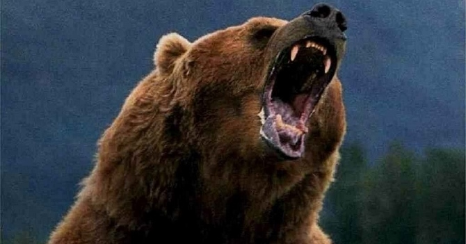 Bruins Hd Wallpaper Hunter S Pov Footage Of Grizzly Bear Climbing Tree To