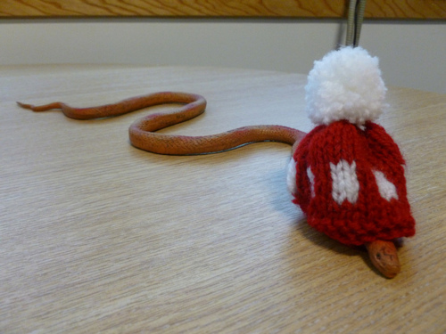 Snakes In Hats 21
