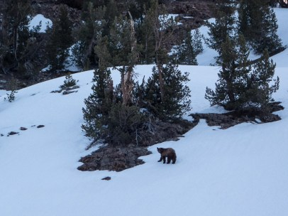 Bear near Little McGee Lake