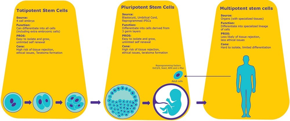 Pluripotent and Multipotent Stem Cells Sigma-Aldrich