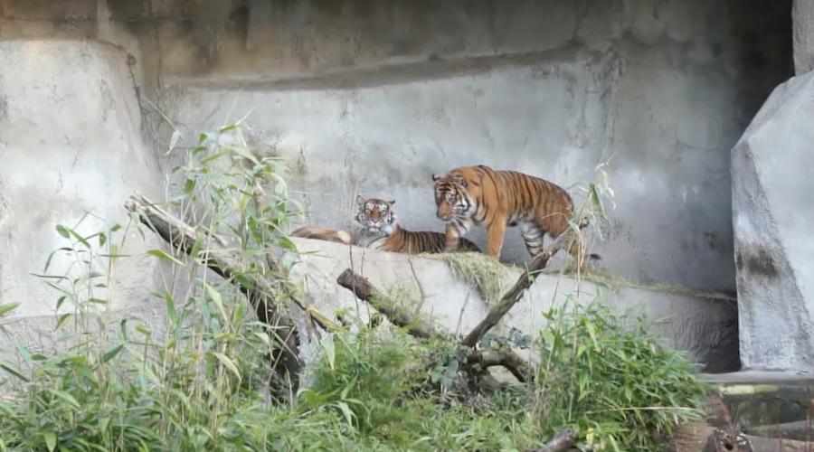 woodland_park_zoo_31