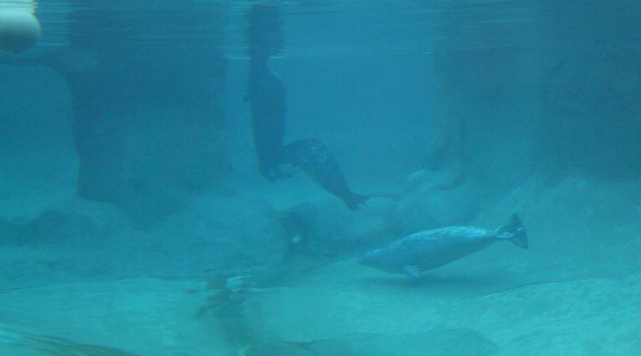 2011-point-defiance-zoo-aquarium-10
