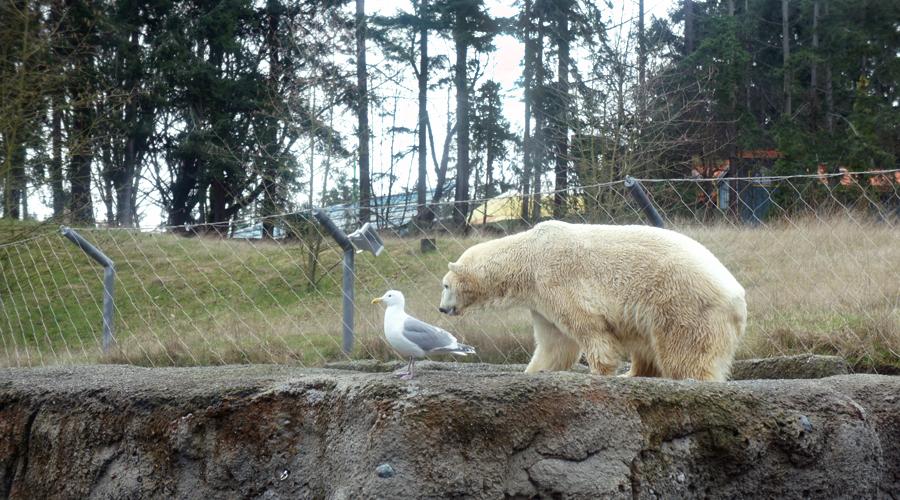 2011-point-defiance-zoo-aquarium-2