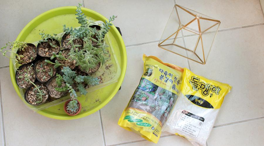 silentlyfree-2016-succulents-terrarium-diy-01