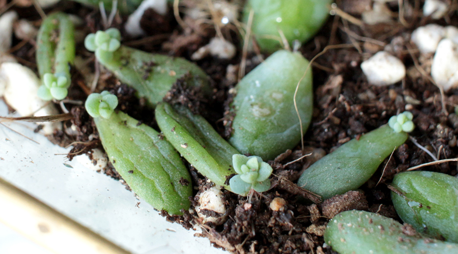 silentlyfree-succulents-how-to-grow-06