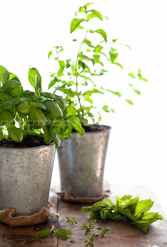 How To Grow Your Own Indoor Culinary Herb Garden | Simple Bites