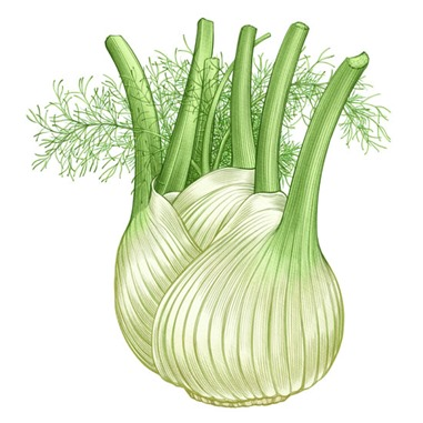 Fennel-sq jpg