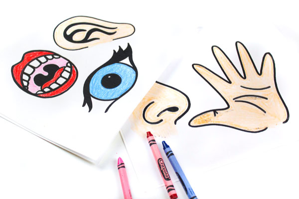 Download These Free Printable 5 Senses For Kids Puppets To Teach