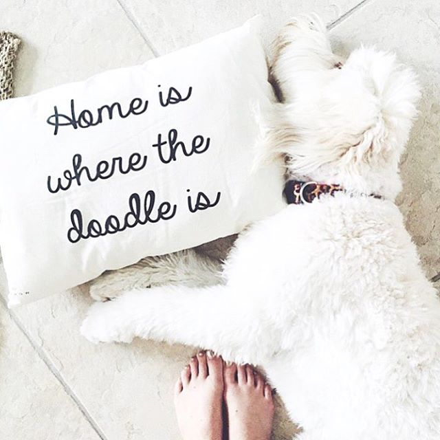 Fridays are optional right? simplyleopard goldendoodle throwpillownbspRead more