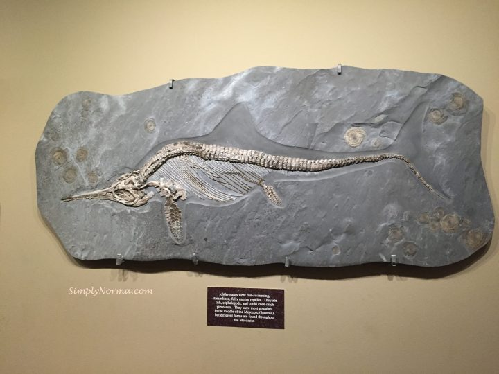 Ichthyosaurs, The Zuhl Museum