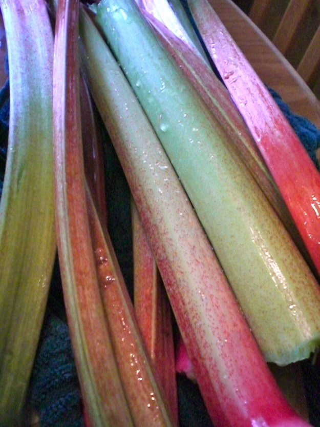 These are what rhubarb stalks look like!