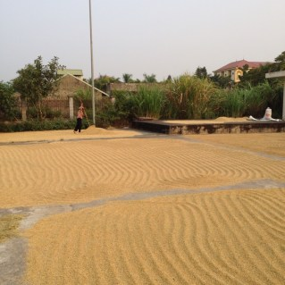 www.singapbyart.com-ninhbinh-drying-rice.jpg