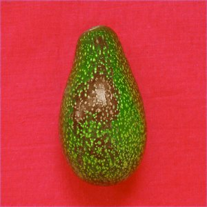 avocado from Sippity Sup