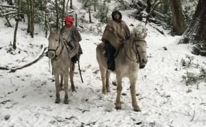 D-caballo-nieve-3435