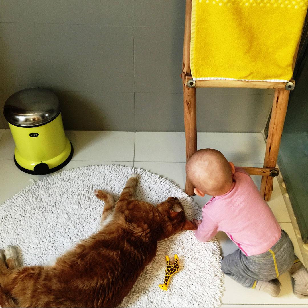 regn_babyogkatt