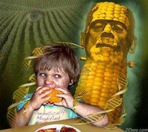 franken-corn-DNA