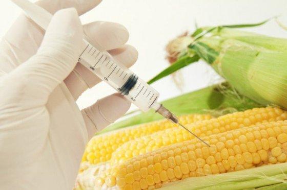 GMO dangers