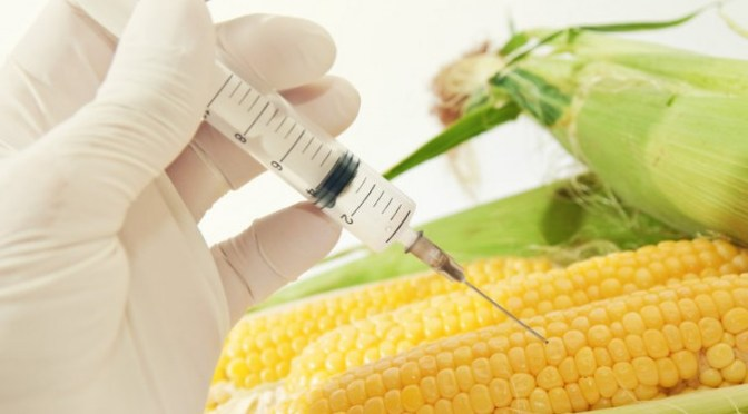 GMO dangers – another published paper retracted UPDATE