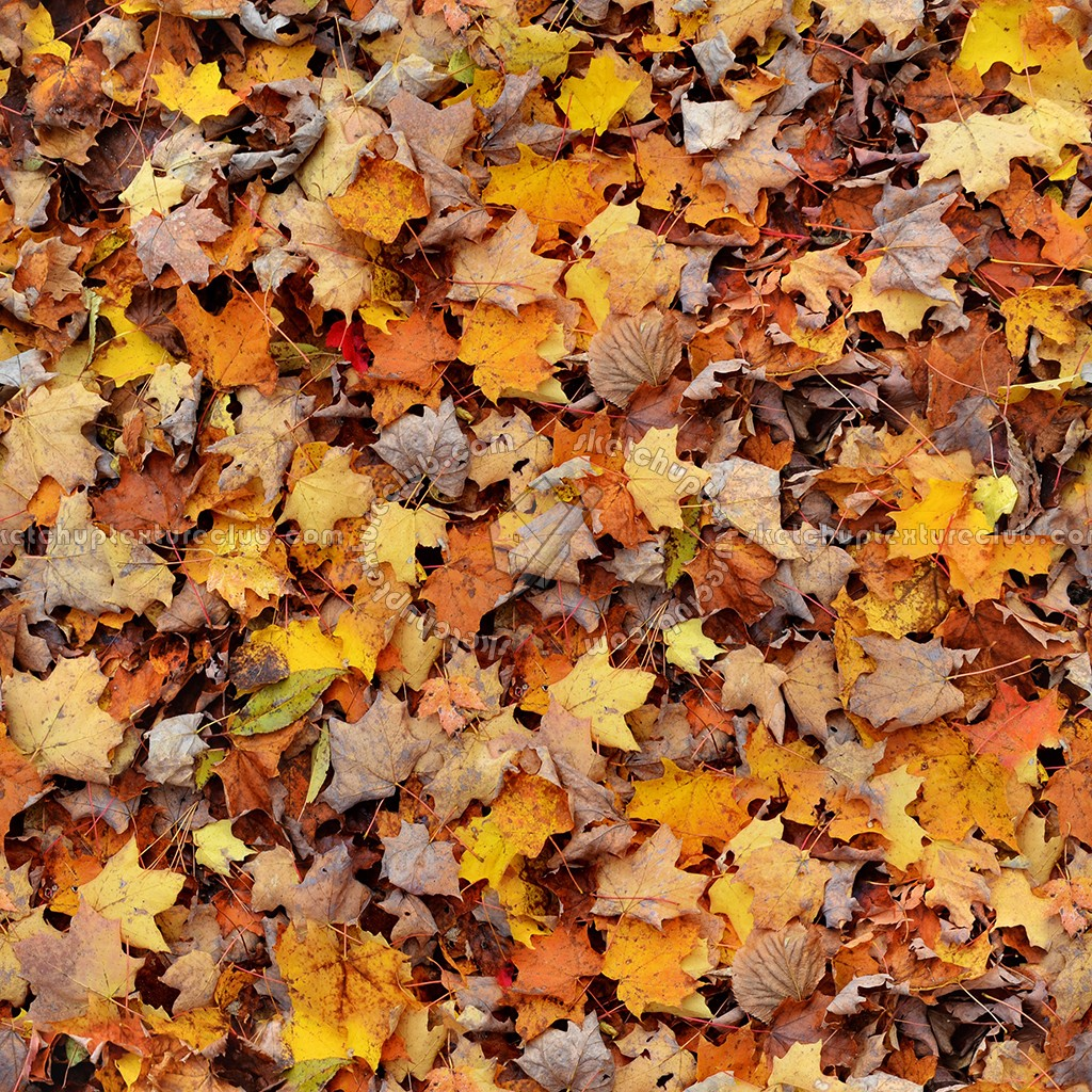 A Fall Wallpaper Leaves Dead Texture Seamless 13124