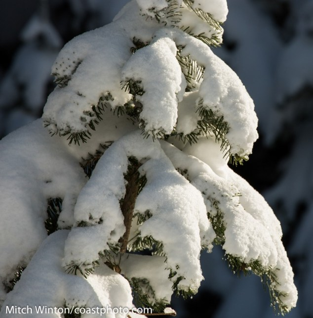Whistler November Snow 1