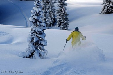 Jackson Hole powder day