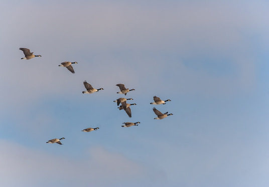 Teamwork - Lessons From Geese - The Skills Garage