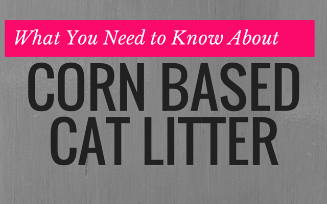 What You Need to Know About Corn-Based Cat Litter