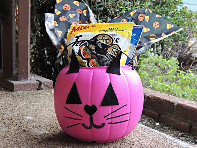 Make This BOO Kit for your Favorite Cat This Halloween