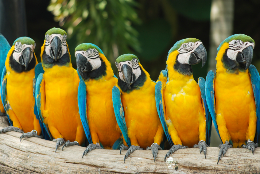 Studying Quotes Wallpaper Why Leaders Don T Need Parrots