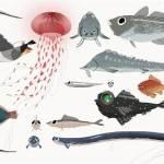sta_fish