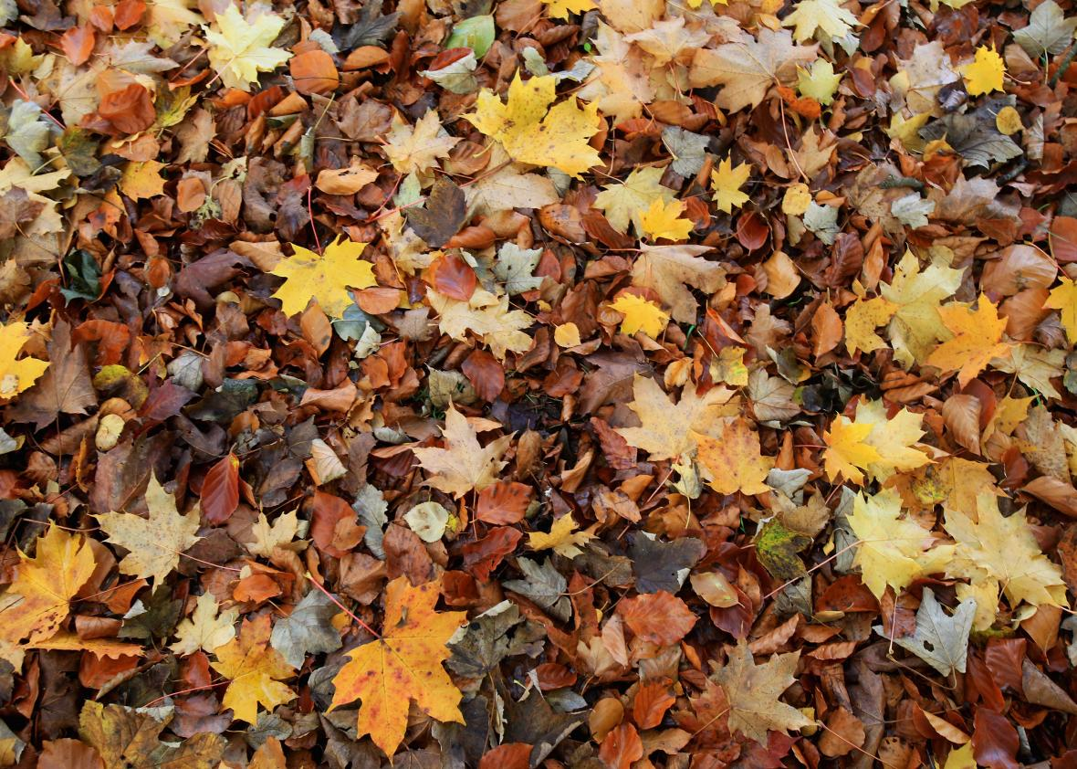Fall In New England Wallpaper A New England Company Will Ship Fall Leaves For 20
