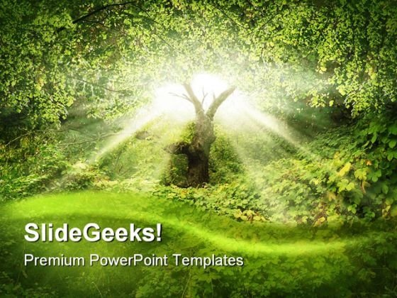 Sunlight In Forest Nature PowerPoint Template 0910 - PowerPoint Themes