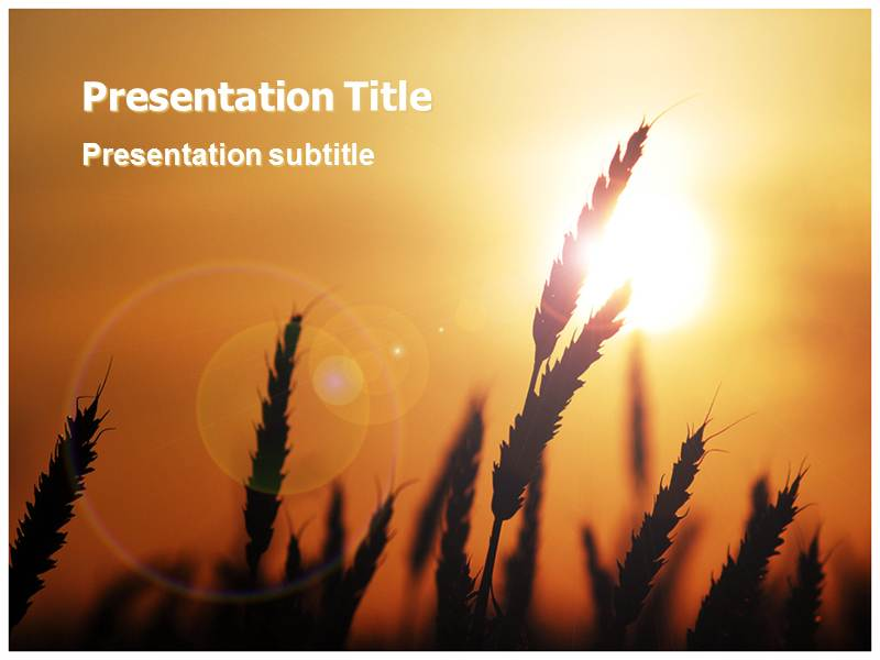 Wheat Field Powerpoint (PPT) Templates PPT Template for Wheat - wheat template