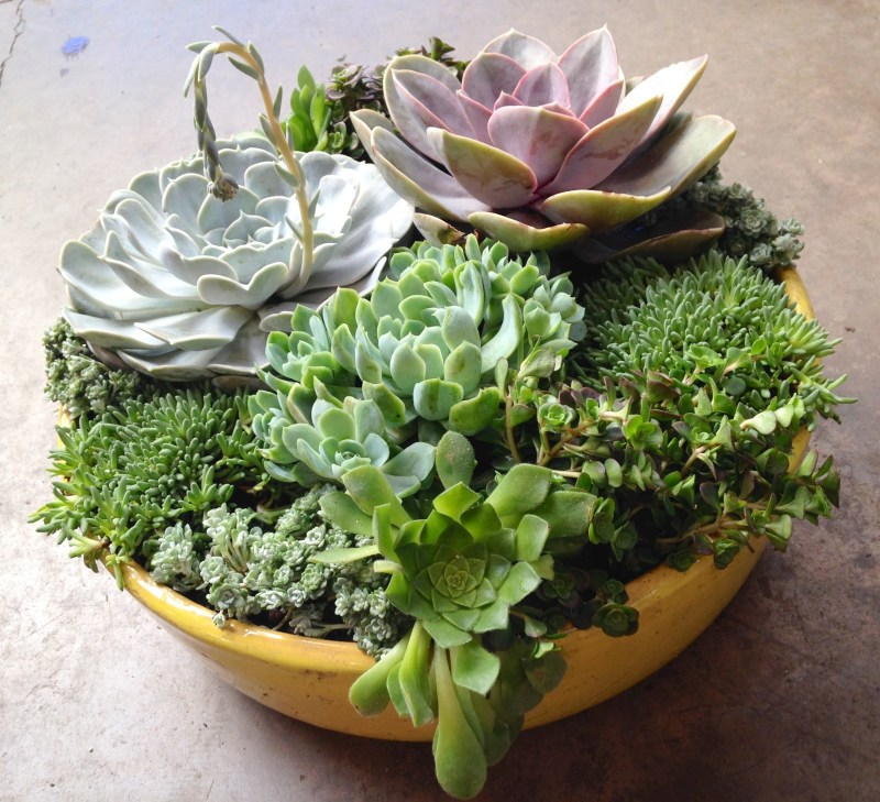 Large Of Diy Gardening Containers