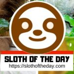 Sloth of The Day Return and Refund Policy Slothoftheday