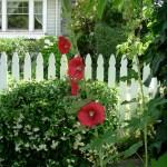 summerredflowers