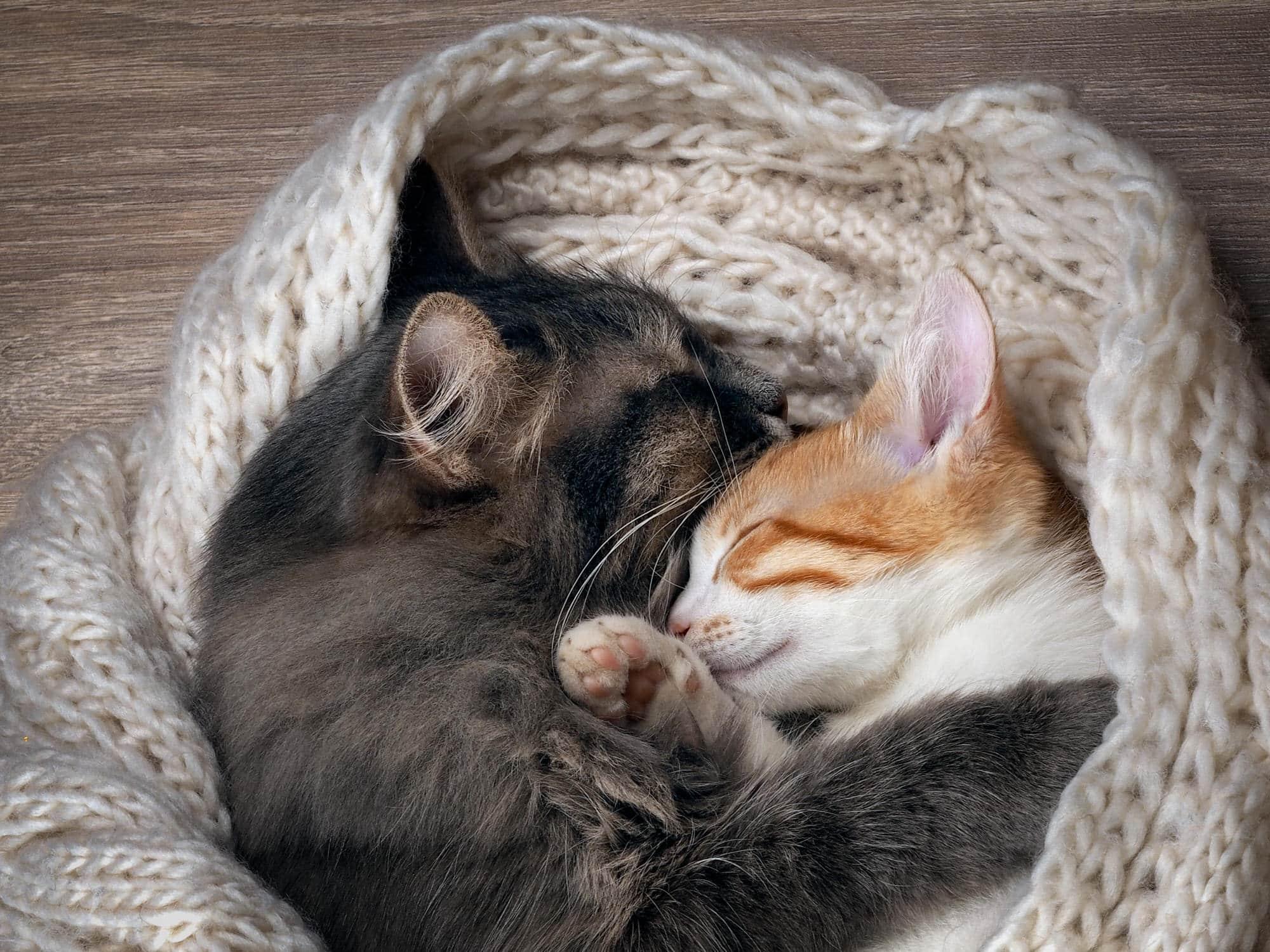 Cute Dog Stretching Wallpaper Katzen Zusammenf 252 Hren So Klappt Es Smart Animals