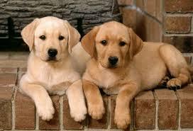 10. Dog breeder