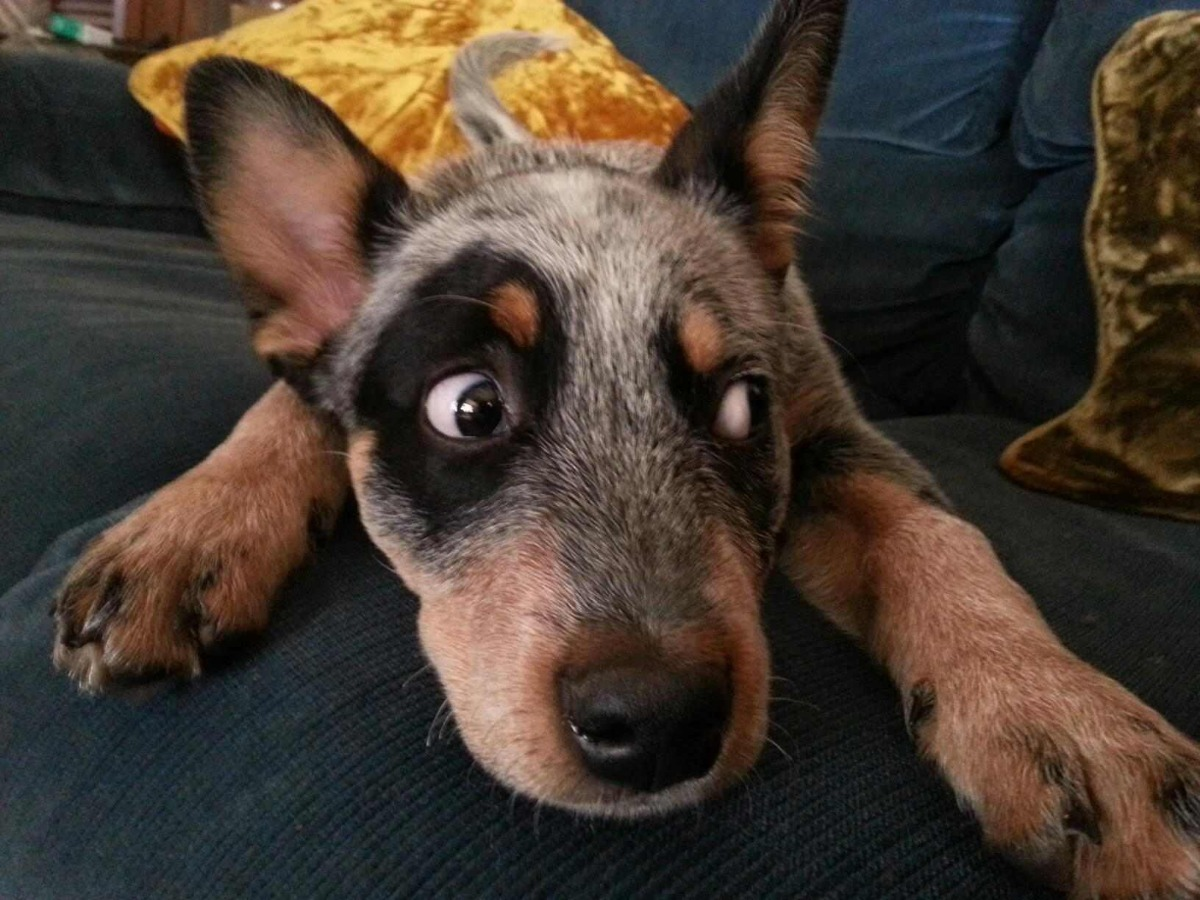 """Home Automation in Use – """"What was that noise?!"""""""