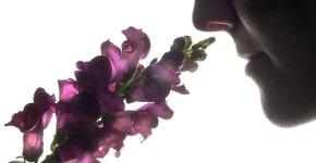 scent1