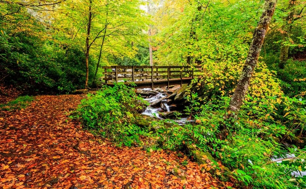 Gatlinburg In The Fall Wallpaper The Top 3 Fall Hiking Trails In The Smoky Mountains