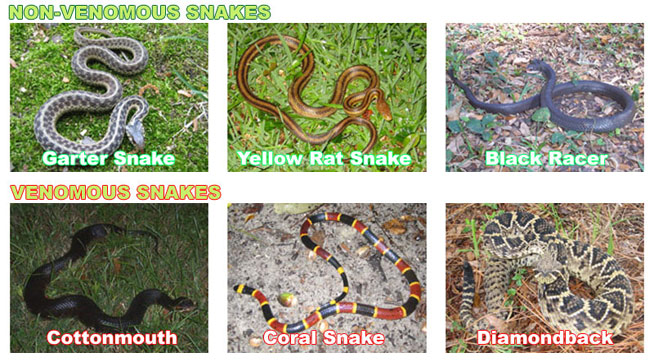 How to Identify a Snake Species