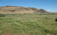 800px-Desert_meadow_in_Eastern_Washington