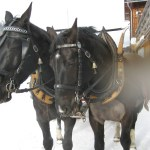 Horses ready to pull sleigh after cheese fondue